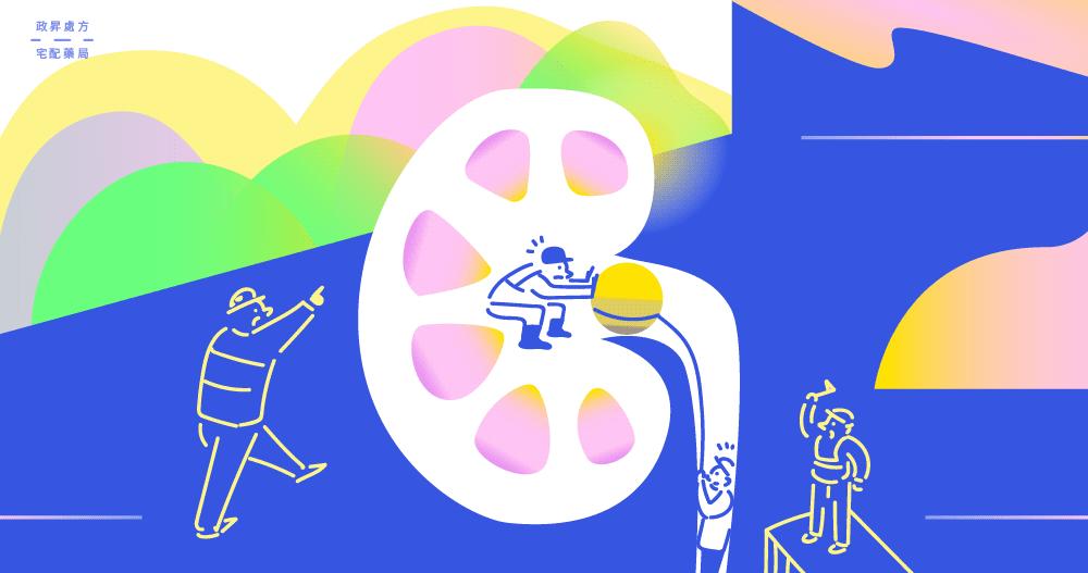 腎結石阻塞會影響人體健康